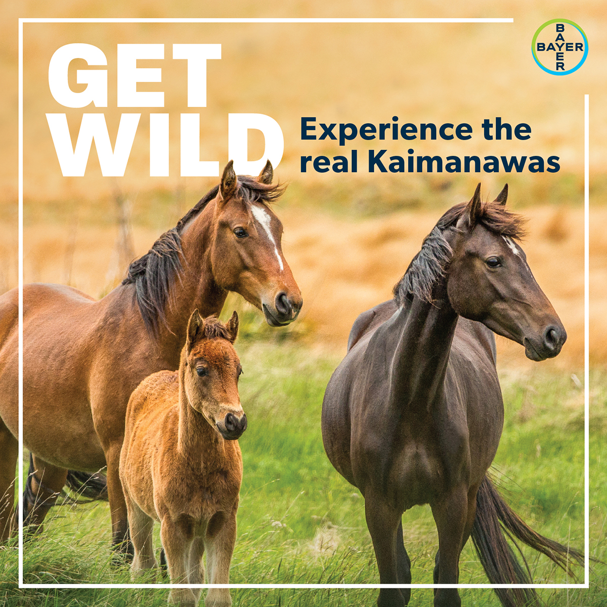 Bayer Ultra-Mox and Equitak Excel Promotion - Win a Kaimanawa Experience